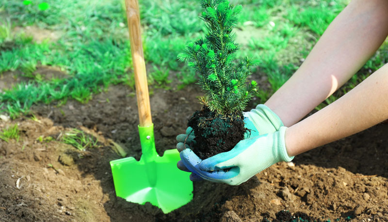 te-damos-10-tips-para-cuidar-el-medio-ambiente2